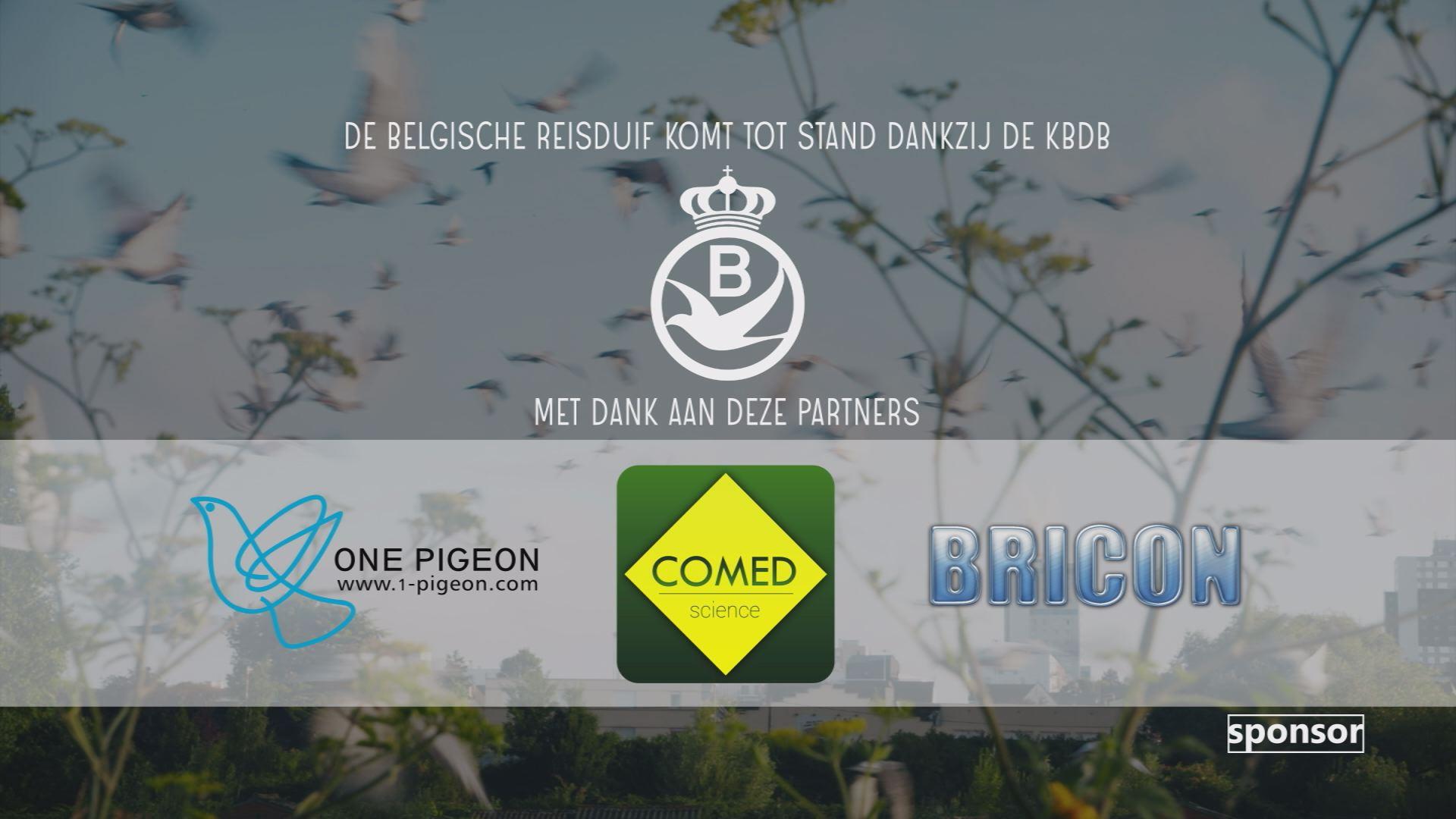 bb BelgischeReisduif